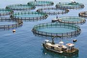 مجوز پرورش ۷۴ هزارو ۱۰۰ تن ماهی در هرمزگان صادر شد