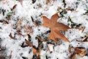 برف و باران زنجان را فرا میگیرد