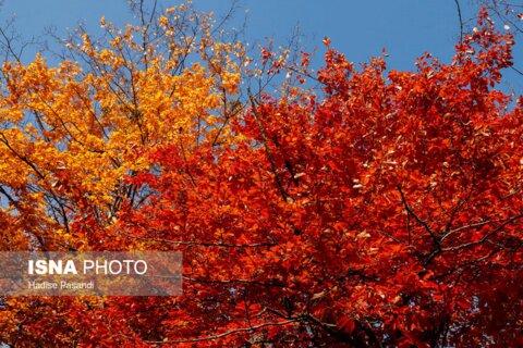 پاییز گلستان