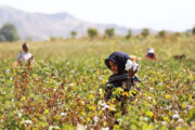 ابلاغ ۳۵ درصد اعتبار سفر دولت به خراسان شمالی در بخش کشاورزی
