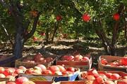 رشد ۱۵ درصدی برداشت انار در آرادان