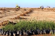 ۲۰ هزار هکتار اراضی بیابانی در اشتهارد درختکاری میشود