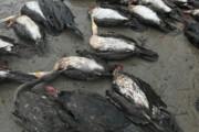 روایت مرگ باکلانها در فضای مجازی و یک نکته