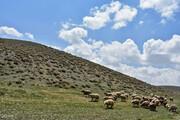 نقش حیاتی مراتع البرز برای پایتخت | بودجه جنگلکاری کافی نیست
