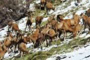 سرما پای حیاتوحش را به روستاهای کوهستانی باز میکند