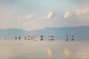 سالانه تراز دریاچه ارومیه نزدیک به یک متر افزایش مییابد