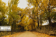 تجربه چهارفصل در پاییز دل انگیز کهگیلویه و بویراحمد
