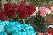 تولید سالانه بیش از ۴ میلیون شاخه گل رز هلندی در یزد