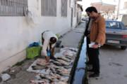 ماهیان بدون تاریخ در سبد غذایی مردم زنجان