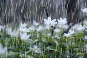باران میبارد، اما بیآبی همچنان باقی است | وضعیت بد بارشها در استان کرمانشاه