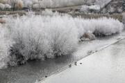 عکس | درختان یخزده سقز