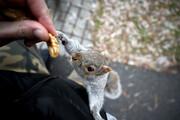 عکس روز: سنجاب در باغ بوستون