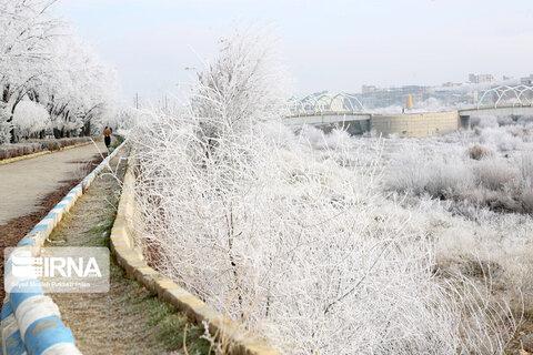 درختان یخزده سقز