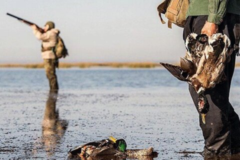 فیلم | نسلکشی پرندگان زیر تیغ توجیهات تکراری