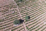 نهالکاری ۳۱ هزار هکتار از اراضی لرستان