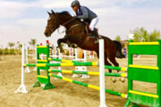 حدود ۵۰۰ اسب ورزشی در زنجان وجود دارد