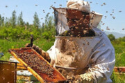 توزیع شکر یارانهای بین زنبورداران
