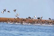 پرندهنگری؛ پیشران توسعه گردشگری تنها جزیره ایرانی دریای خزر