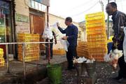 ۵ واحد متخلف عرضه مرغ زنده در شاهیندژ پلمب شد