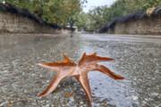 آغاز بارندگیها در کشور از شنبه