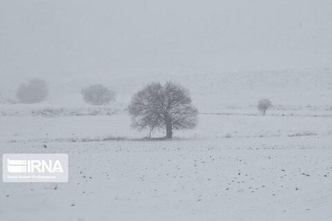 کولاک برف در جادههای کردستان