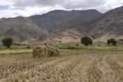 ۷۶هزار هکتار از مزارع کهگیلویه و بویراحمد زیر کشت گندم رفت