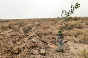 نهالکاری در ۶۷۰ هکتار زمین در آذربایجانغربی تا فروردین ۹۹