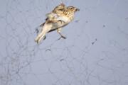 تورهای هوایی در تالاب بینالمللی شادگان همچنان جان میگیرند