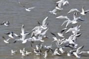 هشدار دامپزشکی اصفهان درباره احتمال شیوع بیماری آنفلوانزای پرندگان