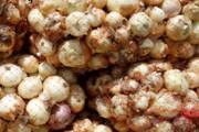 پیازکاران خراسان شمالی براساس ذائقه مردم هند محصول تولید میکنند