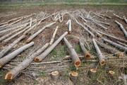 کمبود سوخت یکهزار میلیارد ریال به مراتع خسارت زد