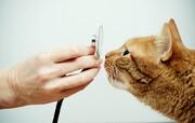 نکته بهداشتی: حفظ سلامت حیوان خانگی