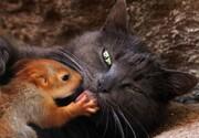عکس سال | گربه و بچه سنجاب