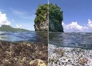 ساخت جزایر مصنوعی قاتل مناطق مرجانی امارات   مرگ سفید مرجانها   خلیج فارس را دریابیم