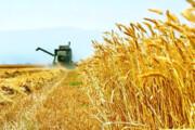 پرداخت ۳۵۰ میلیارد ریال تسهیلات در بخش کشاورزی قم