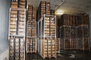 ۷۳۰ هزار تن سیب در سردخانههای آذربایجان غربی