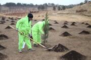کاشت صدهزار اصله درخت در چیتگر
