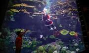 عکس روز | پاپا نوئل زیر آب