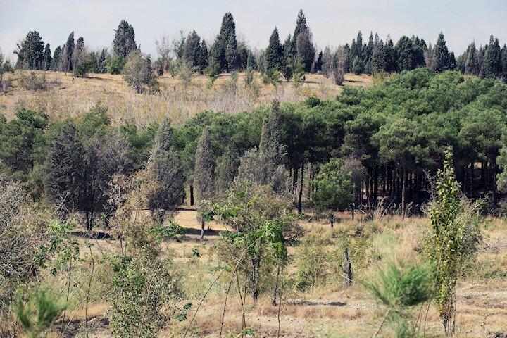 بوستان چیتگر