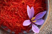 خریداری ۱۲ تن زعفران از کشاورزان تربتحیدریه