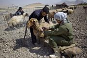 واکسیناسیون ۷ میلیون و ۳۵۰ هزار دام در کرمانشاه