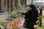 ویزیت گیاهان بیمار در کلینیک گل و گیاه سی بویه
