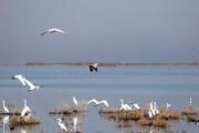 واکسن آنفلوانزای  پرندگان در آذربایجان شرقی تأمین شد