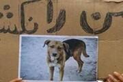 سگکشی در دزفول و اعتراض دوستداران حیوانات