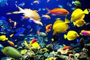 احداث بزرگترین واحد پرورش ماهیان زینتی جهان در قزوین