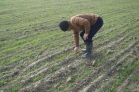 بهرهبرداری از ۴۳ پروژه کشاورزی در خراسان شمالی