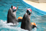 دلایل پیمانکار دلفیناریوم تهران برای تعلل در اعلام مرگ آلفا | علت مرگ دلفین ۳۰۰ هزار دلاری چه بود؟