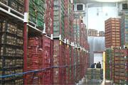 صدور پروانه ساخت برای سردخانههای خالی | ۹۵ درصد سیب تولید استان بدون مشتری