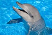 دلفینها چقدر عمر میکنند | اسارت چه بلایی سر عمر دلفینها میآورد؟