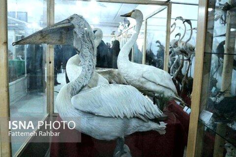 موزه بهاباد
